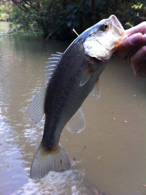 千葉県 野池 バス釣り