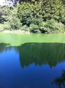 千葉県 野池 ブラックバス釣り