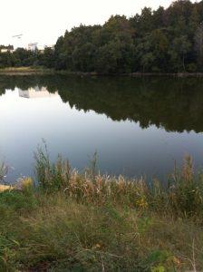 茨城県 野池 バス釣り