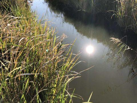 茨城県 野池